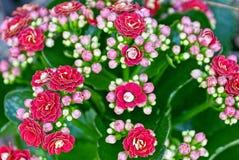 Ανθοδέσμη των λουλουδιών με τα μικρά κόκκινα λουλούδια Στοκ Φωτογραφίες