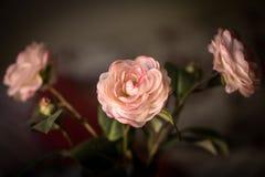 Ανθοδέσμη των λουλουδιών, ρόδινα τριαντάφυλλα υφάσματος σε ένα σκοτεινό υπόβαθρο Στοκ Φωτογραφία