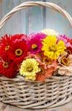 Ανθοδέσμη των λουλουδιών της Zinnia στο ψάθινο καλάθι Στοκ Εικόνα