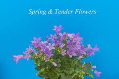 Ανθοδέσμη των λουλουδιών Στοκ Εικόνες