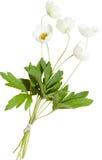 Ανθοδέσμη των λουλουδιών anemones, χρώματα Πάσχας, που απομονώνονται Στοκ Εικόνες