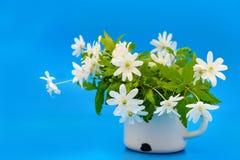 Ανθοδέσμη των λουλουδιών snowdrop Anemone Στοκ εικόνες με δικαίωμα ελεύθερης χρήσης