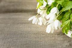 Ανθοδέσμη των λουλουδιών snowdrop Anemone Στοκ Φωτογραφίες