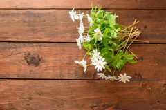 Ανθοδέσμη των λουλουδιών snowdrop Anemone Στοκ φωτογραφίες με δικαίωμα ελεύθερης χρήσης