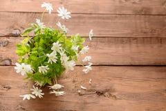 Ανθοδέσμη των λουλουδιών snowdrop Anemone Στοκ Εικόνες
