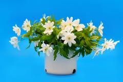 Ανθοδέσμη των λουλουδιών snowdrop Anemone Στοκ φωτογραφία με δικαίωμα ελεύθερης χρήσης