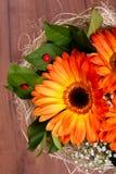Ανθοδέσμη των πορτοκαλιών gerberas και λίγων ladybugs Στοκ εικόνες με δικαίωμα ελεύθερης χρήσης