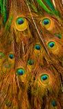 Ανθοδέσμη των φτερών Peacock Στοκ εικόνα με δικαίωμα ελεύθερης χρήσης