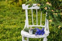 Ανθοδέσμη των cornflowers στην παλαιά καρέκλα Στοκ Εικόνα