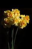 Ανθοδέσμη των daffodils στοκ φωτογραφία