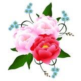 Ανθοδέσμη των peonies με τα μπλε λουλούδια Στοκ Φωτογραφίες