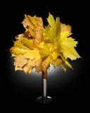 Ανθοδέσμη φθινοπώρου φύλλα σφενδάμου στοκ εικόνες