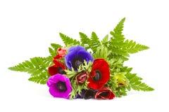 Ανθοδέσμη Anemones Στοκ Εικόνες