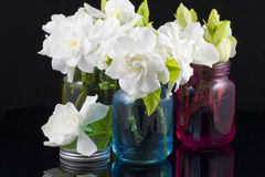 Ανθοδέσμη Gardenias Στοκ Εικόνες