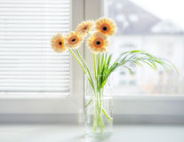 Ανθοδέσμη Gerberas στο βάζο στο windowsill με το φωτεινό φως της ημέρας Στοκ εικόνα με δικαίωμα ελεύθερης χρήσης