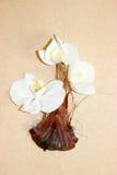 Ανθοδέσμη orchids vase Στοκ φωτογραφία με δικαίωμα ελεύθερης χρήσης