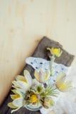 Ανθοδέσμη primroses στο στρογγυλό βάζο με το περιδέραιο ευχετήριων καρτών εγγράφου και μαργαριταριών των γυναικών Στοκ Εικόνες