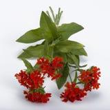 Ανθοδέσμη Rudbeckia στοκ εικόνες