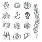 Ανθρώπινα εσωτερικά λεπτομερή όργανα εικονίδια καθορισμένα Στοκ Εικόνες
