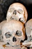 ανθρώπινα κρανία Στοκ φωτογραφία με δικαίωμα ελεύθερης χρήσης