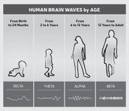 Ανθρώπινα κύματα εγκεφάλου κατά διάγραμμα διαγραμμάτων ηλικίας - σκιαγραφίες ανθρώπων ελεύθερη απεικόνιση δικαιώματος