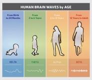 Ανθρώπινα κύματα εγκεφάλου κατά διάγραμμα διαγραμμάτων ηλικίας - σκιαγραφίες ανθρώπων απεικόνιση αποθεμάτων