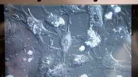 Ανθρώπινα κύτταρα στην επίδειξη φιλμ μικρού μήκους