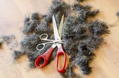Ανθρώπινα μαλλιά και ψαλίδι Στοκ φωτογραφία με δικαίωμα ελεύθερης χρήσης