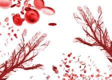 Ανθρώπινα σκάφη κυττάρων αίματος χεριών Στοκ φωτογραφία με δικαίωμα ελεύθερης χρήσης
