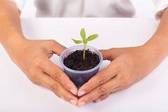 Ανθρώπινα χέρια που κρατούν την πράσινη μικρή έννοια ζωής εγκαταστάσεων νέα Στοκ Φωτογραφίες