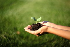 Ανθρώπινα χέρια που κρατούν την πράσινη μικρή έννοια ζωής εγκαταστάσεων νέα με τη θαυμάσια swirly bokeh επίδραση από Petzval το φ στοκ φωτογραφία