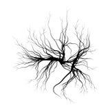 Ανθρώπινες φλέβες, κόκκινο σχέδιο αιμοφόρων αγγείων διανυσματικό λευκό καρχ απεικόνιση αποθεμάτων