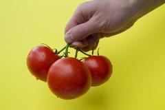 Ανθρώπινη λαβή χεριών τρεις ντομάτες, οριζόντιες Στοκ Φωτογραφία