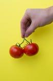 Ανθρώπινη λαβή χεριών δύο ντομάτες, κάθετες Στοκ Εικόνες