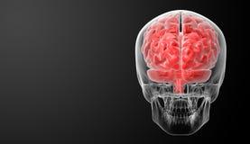 Ανθρώπινη ακτίνα X εγκεφάλου Στοκ φωτογραφία με δικαίωμα ελεύθερης χρήσης