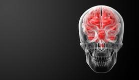Ανθρώπινη ακτίνα X εγκεφάλου Στοκ εικόνες με δικαίωμα ελεύθερης χρήσης
