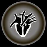 Ανθρώπινη ανατομία καρδιών εικονιδίων στο γκρίζο πιάτο διανυσματική απεικόνιση