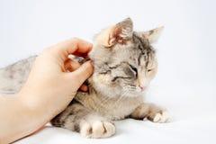 Ανθρώπινη γάτα κτυπήματος χεριών που επισημαίνεται Στοκ φωτογραφία με δικαίωμα ελεύθερης χρήσης