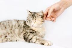 Ανθρώπινη γάτα κτυπήματος χεριών που επισημαίνεται Στοκ Φωτογραφίες