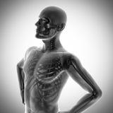 Ανθρώπινη εικόνα ανίχνευσης ακτινογραφιών κόκκαλων Στοκ Εικόνες