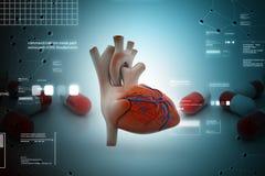 Ανθρώπινη καρδιά διανυσματική απεικόνιση