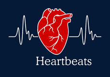Ανθρώπινη καρδιά με το άσπρο καρδιογράφημα κτύπων της καρδιάς ελεύθερη απεικόνιση δικαιώματος