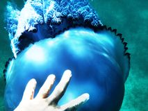 Ανθρώπινη μέδουσα στάσεων χεριών ατόμων κάτω από το νερό σε μια θάλασσα στοκ εικόνες με δικαίωμα ελεύθερης χρήσης