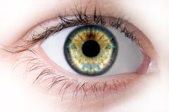 ανθρώπινη μακροεντολή ματιών ομορφιάς Στοκ φωτογραφία με δικαίωμα ελεύθερης χρήσης