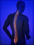Ανθρώπινη σπονδυλική στήλη διανυσματική απεικόνιση