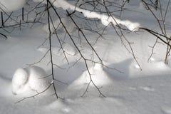 : Ανθρώπινη σφραγίδα στο χιόνι Στοκ Εικόνες