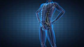 Ανθρώπινη των ακτίνων X ανίχνευση ακτινογραφιών σπονδυλικών στηλών απεικόνιση αποθεμάτων