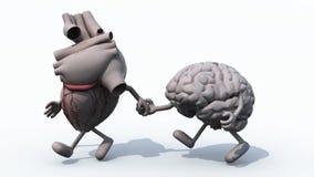 Ανθρώπινοι καρδιά και εγκέφαλος που περπατούν χέρι-χέρι απόθεμα βίντεο