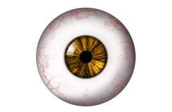 Ανθρώπινος βολβός του ματιού με την κίτρινη ίριδα ελεύθερη απεικόνιση δικαιώματος