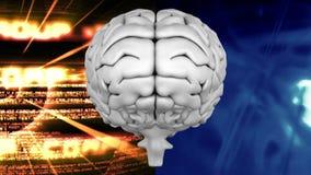 Ανθρώπινος εγκέφαλος που είναι διαιρεμένο υπόβαθρο ελεύθερη απεικόνιση δικαιώματος